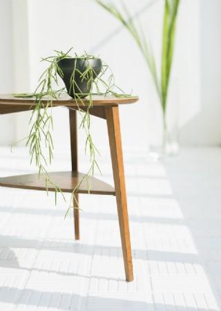 室內綠化和花草0099