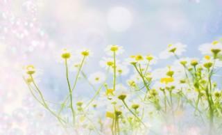 花草背景圖片