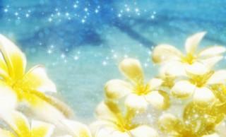 花朵背景圖片