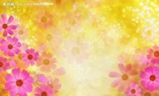太陽花圖片